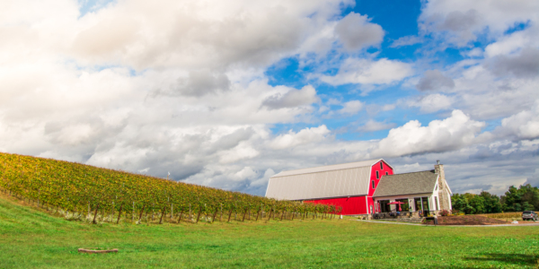 Catoctin Breeze Vineyard - Putting Frederick Wine on the World Map